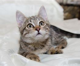Котенок Сонечка в добрые руки! - фото 1 к объявлению