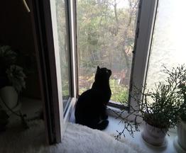 Мишель ищет свой дом - фото 1 к объявлению