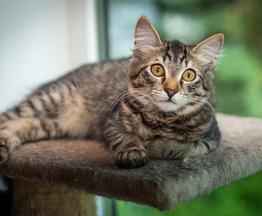 Ищет дом котенок Мося, 4 месяца. - фото 1 к объявлению