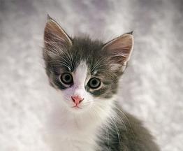 Котенок ищет заботливых хозяев - фото 1 к объявлению