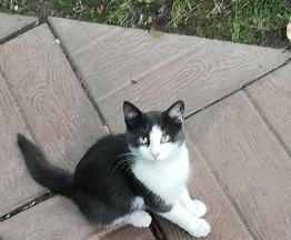 Ищем дом бездомному котику - фото 1 к объявлению