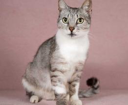 Очаровательная кошка Мими в добрые руки - фото 1 к объявлению