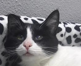 Кошка Марфа в добрые руки - фото 1 к объявлению