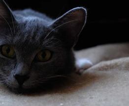 Красивый котик Серый в добрые руки - фото 1 к объявлению