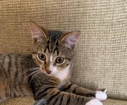 Веселый и позитивный котенок в добрые руки - фото 1 к объявлению