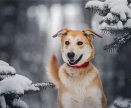 Изящная, красивая собака Айрис в добрые руки! - фото 1 к объявлению