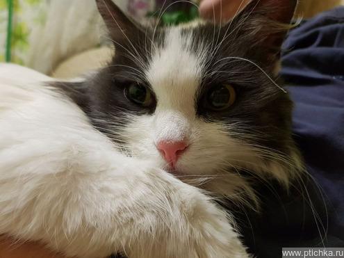Найдена кошка - фотография  к объявлению