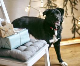 Чудесная собака Гретта в добрые руки. - фото 1 к объявлению
