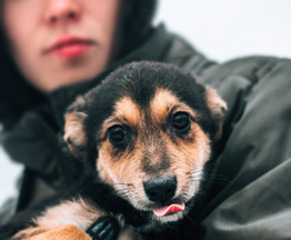 Собака ищет заботливых хозяев - фото 1 к объявлению