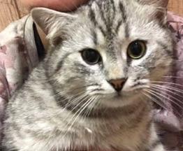 Ищем кота - фото 1 к объявлению