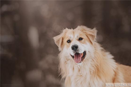 Шикарный пёс Нортон в добрые руки. - фото 1 к объявлению