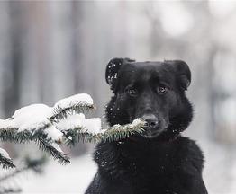 Чудесная собака Берта в добрые руки. - фото 1 к объявлению
