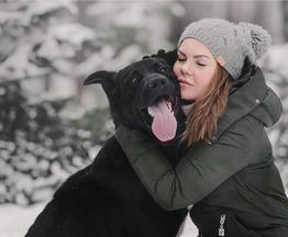 Крупный пёс Дамир в добрые руки. - фото 1 к объявлению