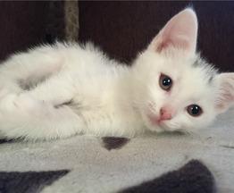 Котенок -мальчик в поиске дома. - фото 1 к объявлению