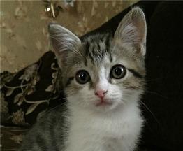 Котенок -мальчик ищет заботливых , ответственных хозяев. - фото 1 к объявлению