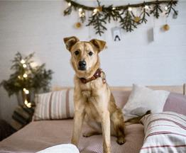 Чудесная собака Ева в добрые руки. - фото 1 к объявлению