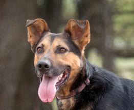 Собака ищет заботливых и ответственных хозяев - фото 1 к объявлению