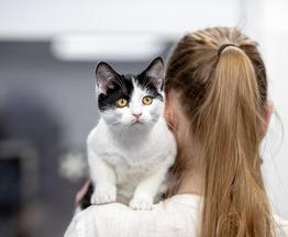 Клаудия –задорный,игривый котенок ищет дом. - фото 1 к объявлению