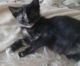 Милая и забавная котенок Фаня в добрые руки - фото 1 к объявлению