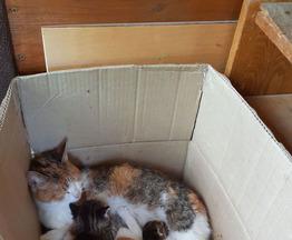 Котята ищут заботливых хозяев - фотография  к объявлению