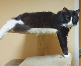Потерялась кошка - фото 1 к объявлению