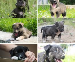 Чудесные щенки ищут дом (мальчики и девочки). - фото 1 к объявлению