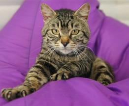 Молодой котик Орион ищет своего человека! - фото 1 к объявлению