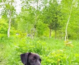 Супер позитивный щенок ищет дом - фотография  к объявлению