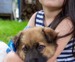 Чудесные щенки Мишаня и Шанелька в поиске дома. - фото 1 к объявлению
