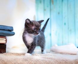 Котята бесплатно - фото 1 к объявлению