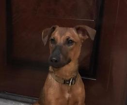 СУпер щенок ищет дом - фотография  к объявлению