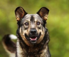 Ищет дом чудесный пес Ромка. - фото 1 к объявлению