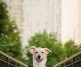 Метис молодая собака Руся в добрые руки - фото 1 к объявлению