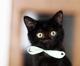 Черный котёнок в добрые руки. - фото 1 к объявлению