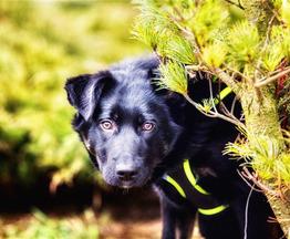 Знакомьтесь!Чудесный щенок Лука! - фото 1 к объявлению