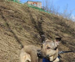 Активный щенок Локки ищет дом - фото 1 к объявлению