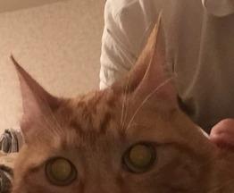 Котик ищет заботливых хозяев - фото 1 к объявлению