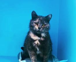 Кошка ищет заботливых хозяев - фотография  к объявлению