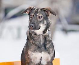 Давайте знакомиться, собака Лиза - фото 1 к объявлению
