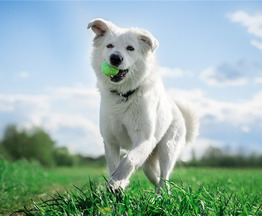 Ищет дом молодой и невероятно красивый пёс Норман! - фото 1 к объявлению