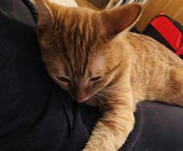 Рыжий котик и трехцветная кошечка - фото 1 к объявлению