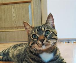 Супер-кот ищет дом! - фото 1 к объявлению