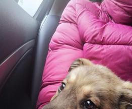 Моника щенок ребенок ищет родителей - фото 1 к объявлению