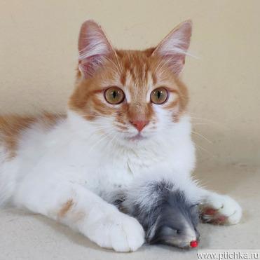 Миниатюрная кошка, 1 год - фото 1 к объявлению