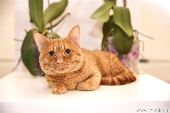 Котик Риддик ищет семью. - фото 1 к объявлению