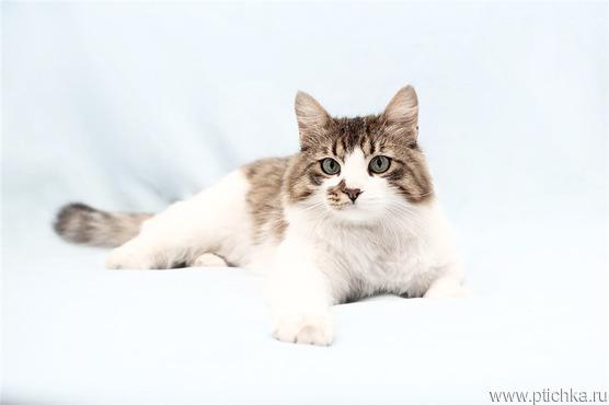 Красивый котик Тоша в добрые руки. - фото 1 к объявлению