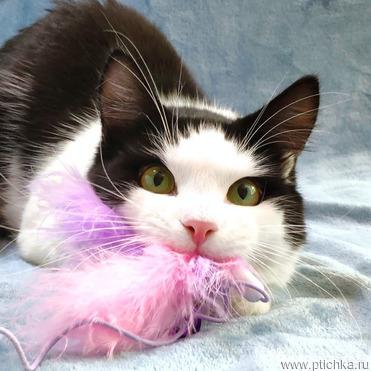 Молодому коту нужен дом - фото 1 к объявлению