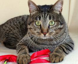 Кот гений в добрые руки - фото 1 к объявлению