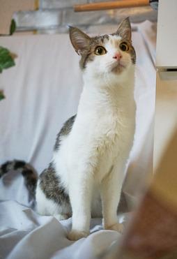 Мудрый кот Харитон в добрые руки. - фото 1 к объявлению