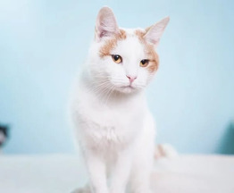 Котик ЧИП в добрые руки. - фотография  к объявлению